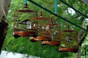 bird market Mogkok